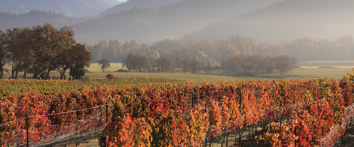 Applegate Valley Fall Vineyards
