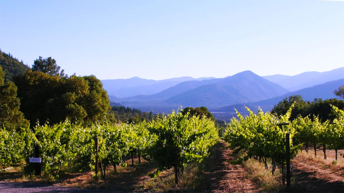 Wooldridge Creek Vineyard
